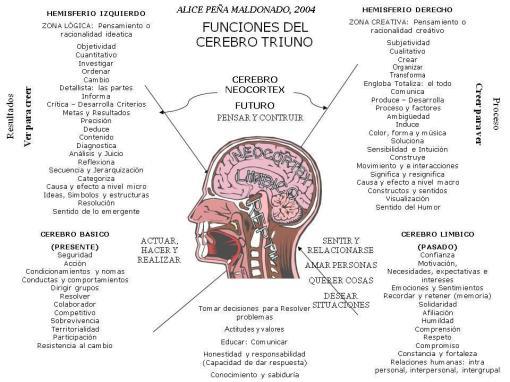 cerebro-triuno2
